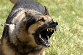 Canine Encounters For Law Enforcement • Central Texas Council of Governments